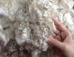 Сухая чистка овчины