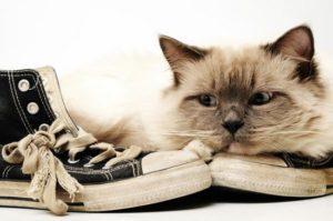 Кот не будет покушаться на обувь, если его лоток всегда будет чистым