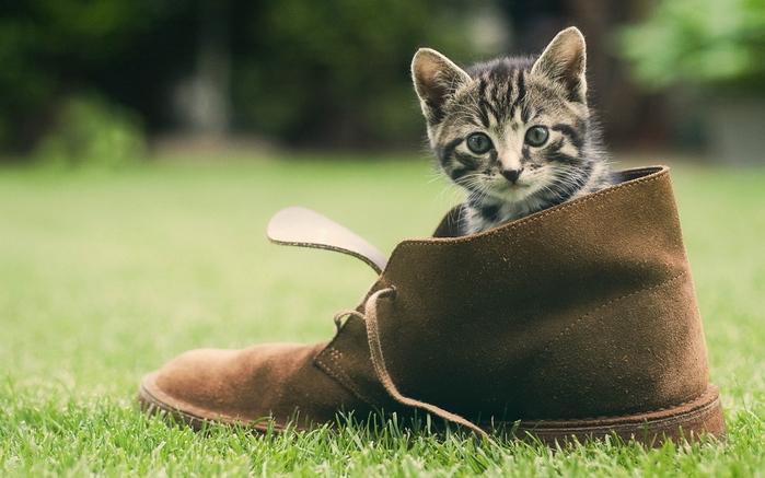 Иногда домашние питомцы путают собственный лоточек с обувью хозяина