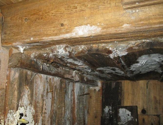 Как избавиться от плесени в подвале дома и гаража, как бороться с грибком на фундаменте, в подполье