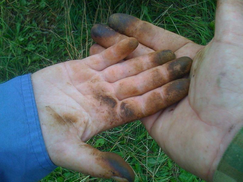 Грязные руки от грибов