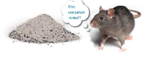 Зола против крыс
