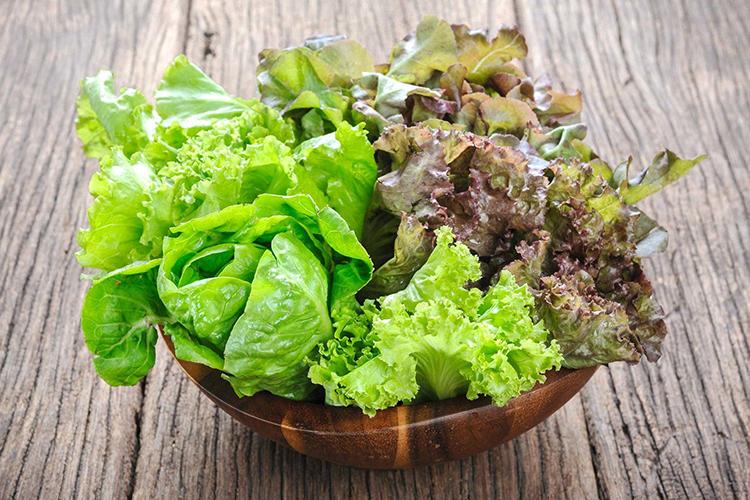 Листья салата: как сохранить на зиму в холодильнике на несколько дней