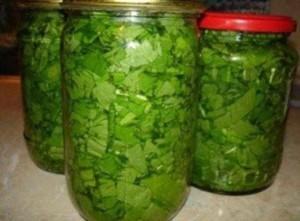 Как сохранить шпинат на зиму в домашних условиях