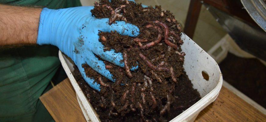 Как хранить червей для рыбалки в домашних условиях летом