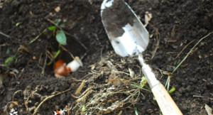 Как хранить луковицы тюльпанов в домашних условиях